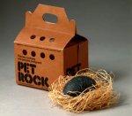 Pet Rock Photo